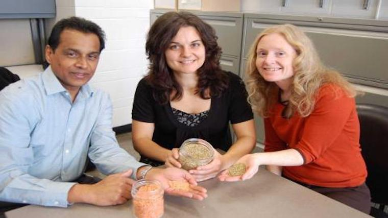 A photograph of researchers Dan Ramdath of Agriculture and Agri-Food Canada, U of G PhD student Dita Moravek and U of G Prof. Alison Duncan