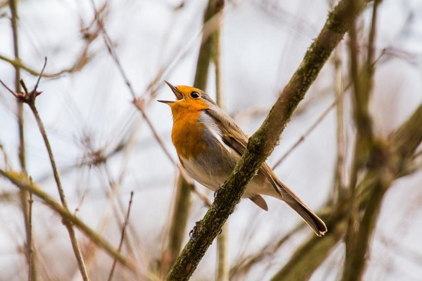 Singing bird perched on tree branch