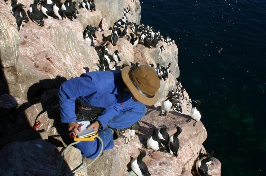 researcher on island with murres