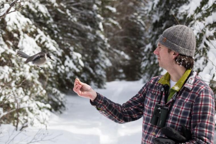 Photo of Ryan Norris feeding a grey jay