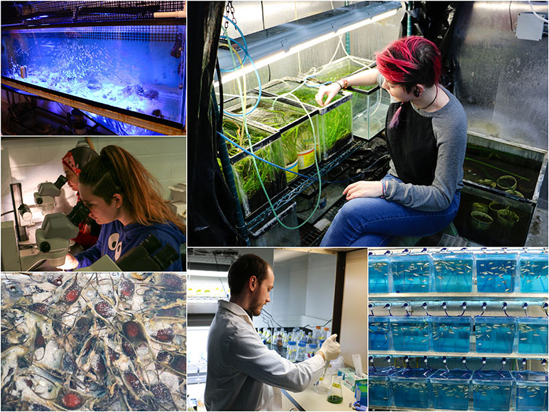 aqualab collage