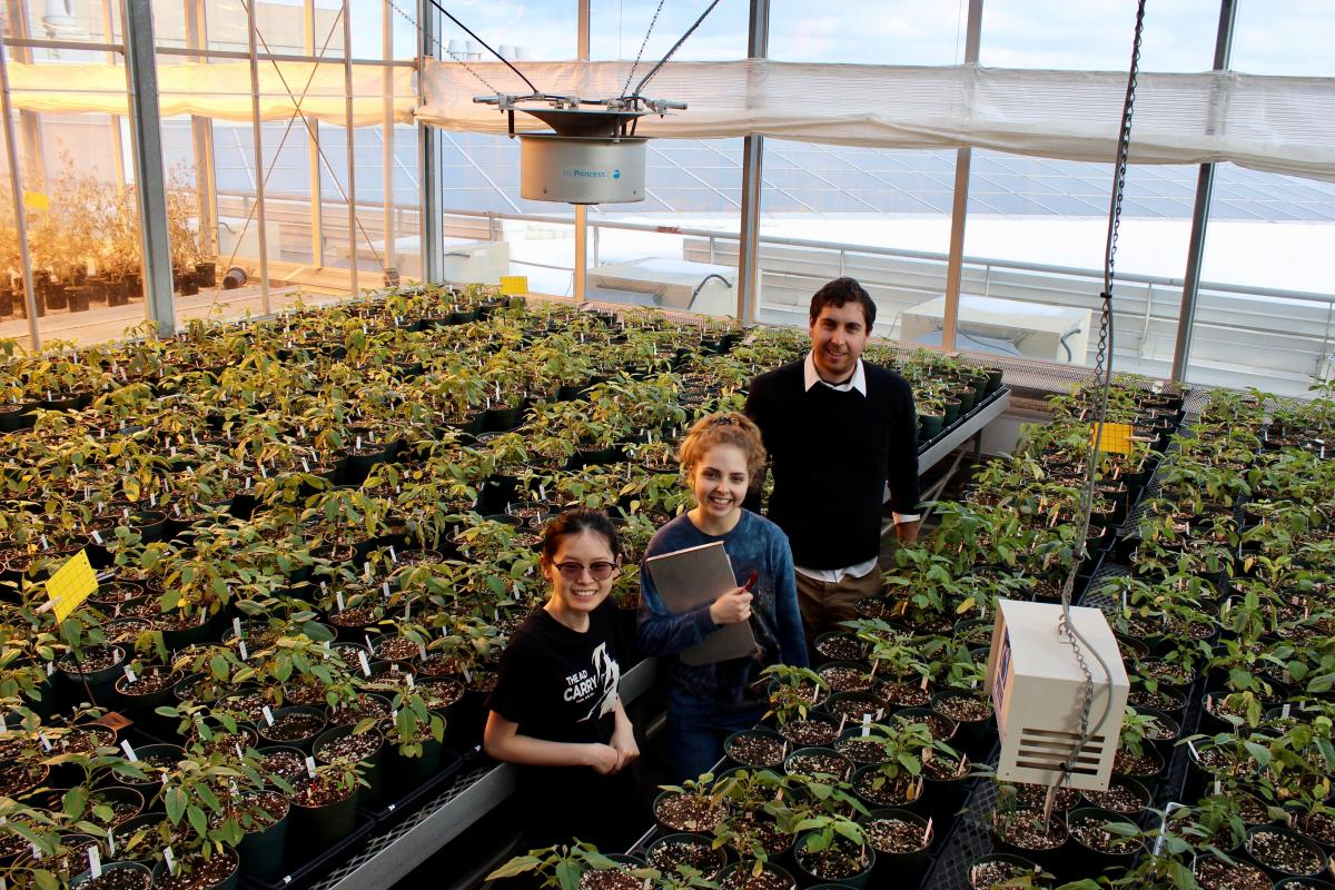 photo of students in Phytotron