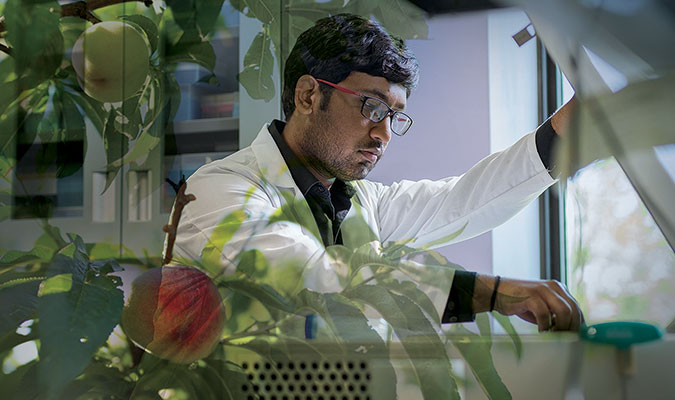 a young male student with short dark ahir and glasses, wearing a white lab coat. He looks to be using tools in a research lab to complete work, and the image is overlayed by pictures of a research lab storage cabinet and branches of a peach tree.