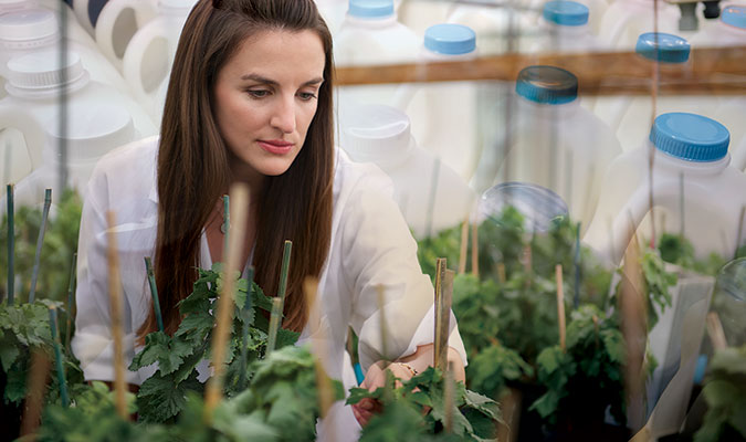 A woman with long, brown hair wearing a white lab coat tending to plants for research purposes, overlayed with test bottles also used in her research.