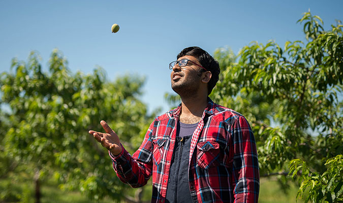 A male student shows him in a peach orchard, wearing a red, white, black and blue plaid shirt and tossing a small peach fruit up in the air with one hand.