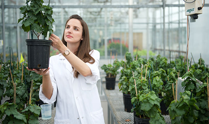 A woman with long brown hair on this page. She is holding up and inspecting a green, leafy plant in a black pot that is being used in her research. She is in a greenhouse space where many other potted plants are situated behind her.