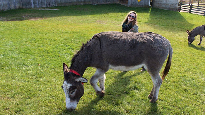 Amy with a donkey at the local donkey sanctuary