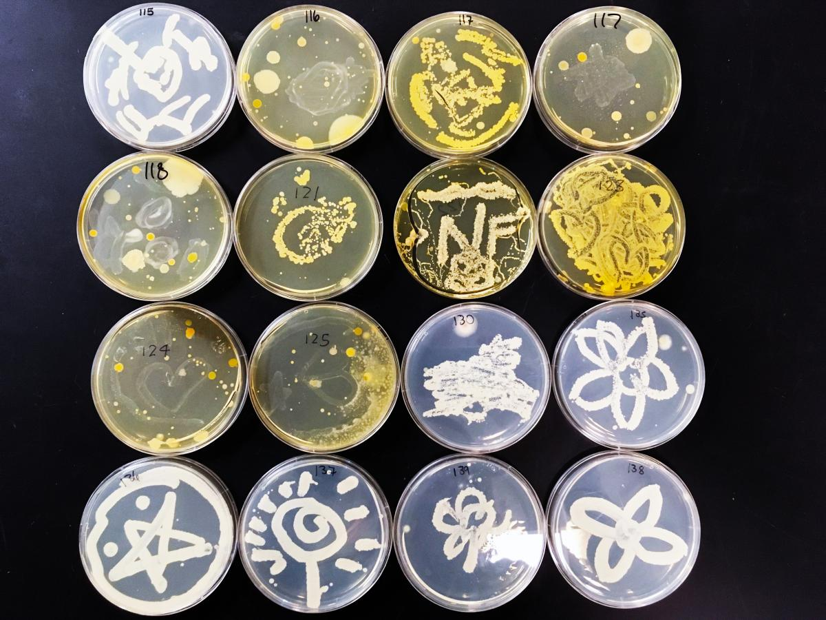 Fifth Set of Microbe Art