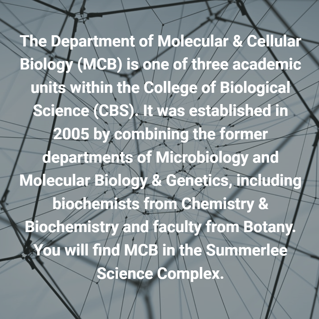 The Department of Molecular & Cellular Biology (MCB) is one of three academic units within the College of Biological Science (CBS). It was established in 2005 by combining the former departments of Microbiology and Molecular Biology & Genetics, including biochemists from Chemistry & Biochemistry and faculty from Botany. You will find MCB in the Summerlee Science Complex.