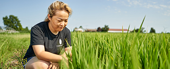 A researcher looking at a rice crop.