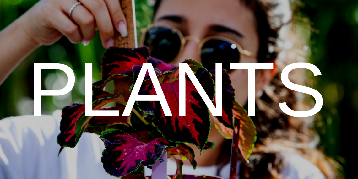 """A student measuring a plant, with the text """"Plants"""" overlaid."""