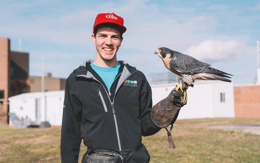 David stands with a peregrine falcon perched on his gloved hand.