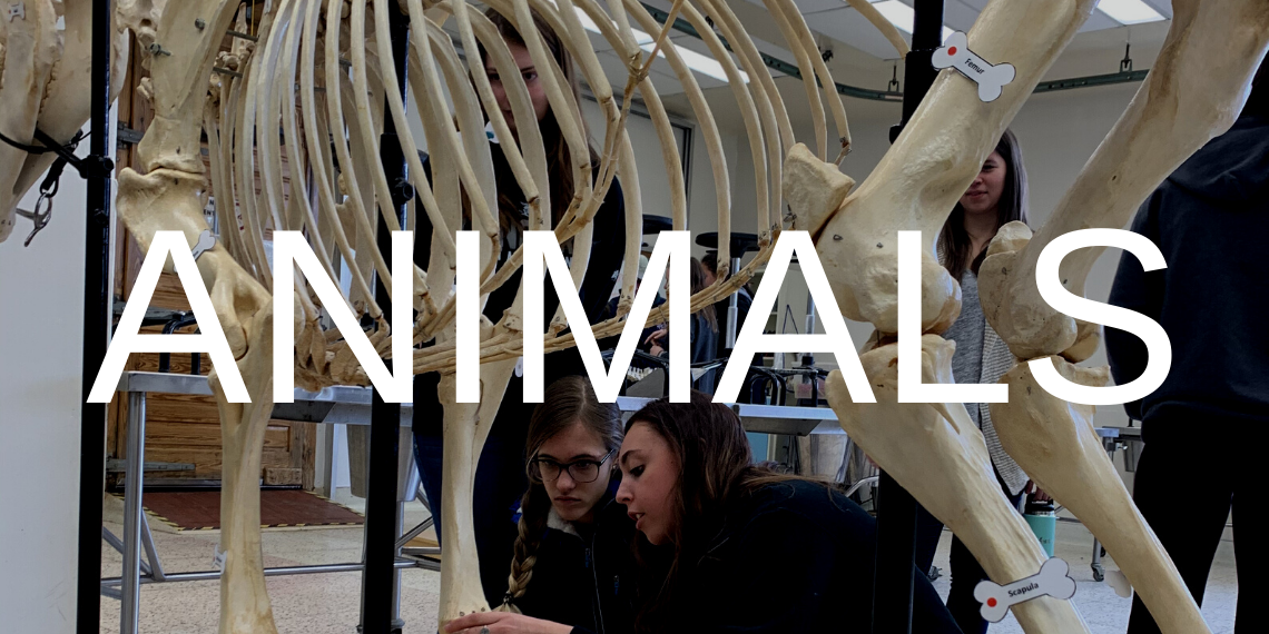 "Students in a classroom looking at animal skeletons with the word ""Animals"" overlaid."