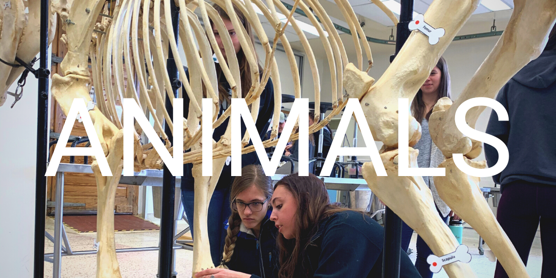 """Students in a classroom looking at animal skeletons with the word """"Animals"""" overlaid."""