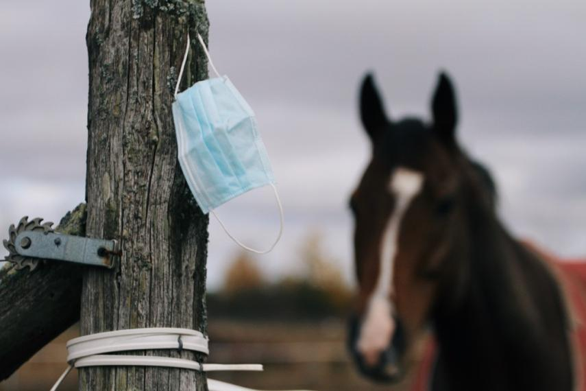 A face mask on a wooden post with a horse in the background.