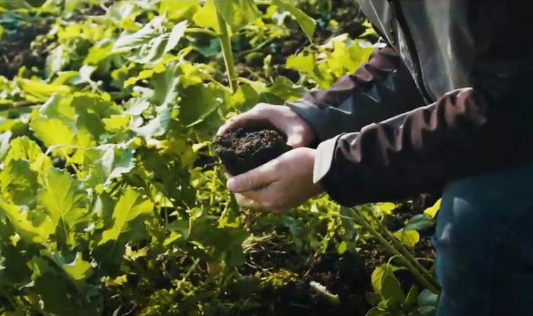 A person holds a handful of soil in a farmer's field.
