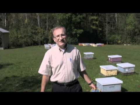 Dr. Ernesto Guzman, Professor and Director of the Honey Bee Research Centre