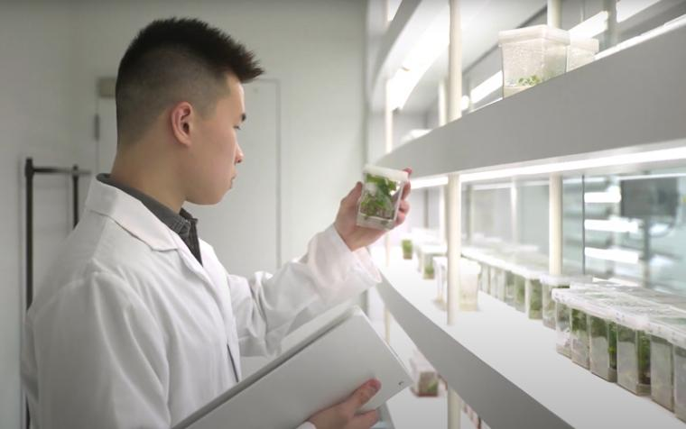 Male student in lab coat looks at plant specimen