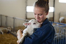 A student holds a lamb.