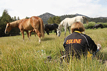 A student, with a jacket that says equine, sits in a pasture with horses.