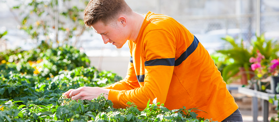 Student looks down at tray of plants in greenhouse