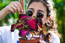 Female student in sunglasses measures the size of a potted plant