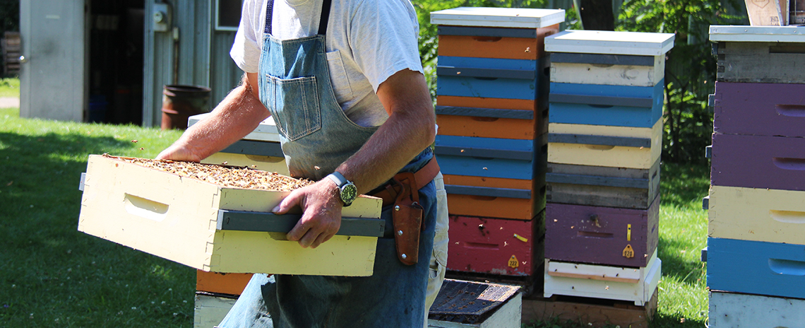 A bee keeper working with a bee hive.