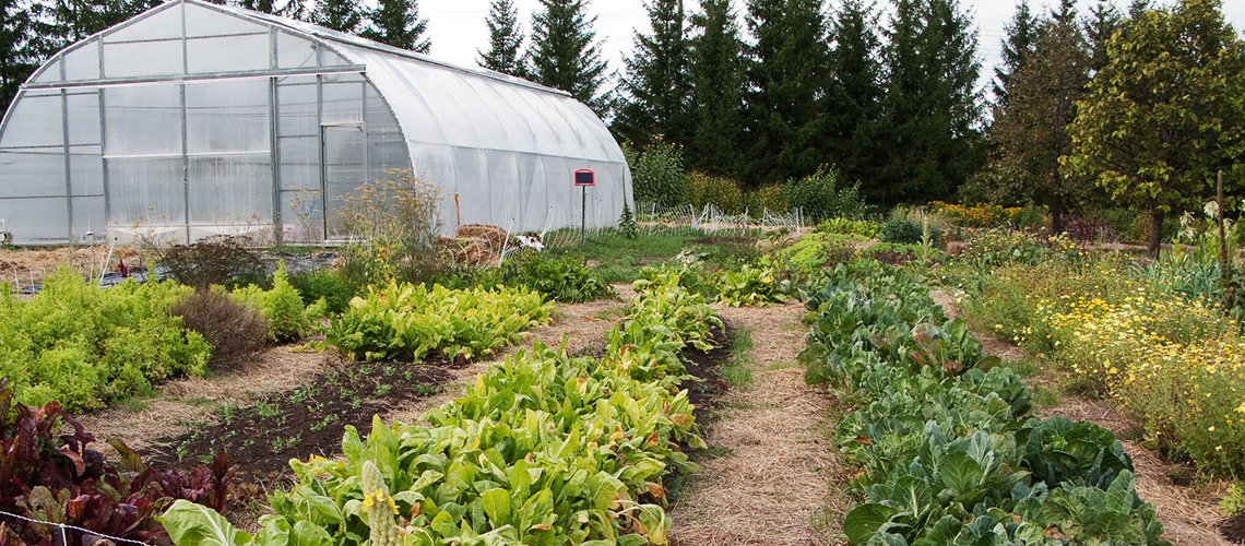 View of a green house with a plot of vegetables growing beside it.