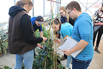 Four students stand around a large plant, trying to identify it.
