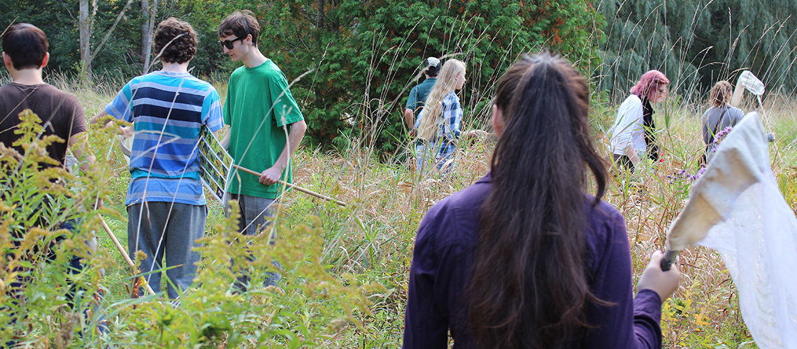 A group of students with nets walk through a forested area looking for insects.