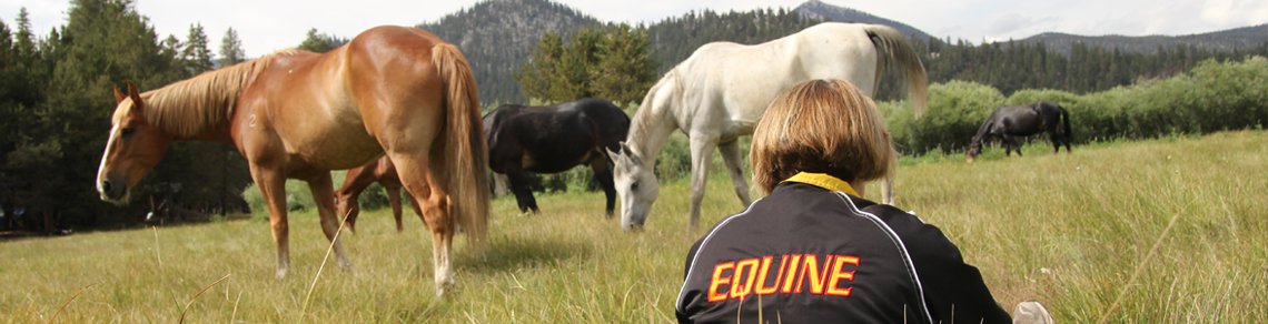 Student sitting in pasture grass with horses wearing EQUINE jacket