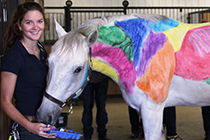 Equine management student stands with horse that has muscle groups drawn on.