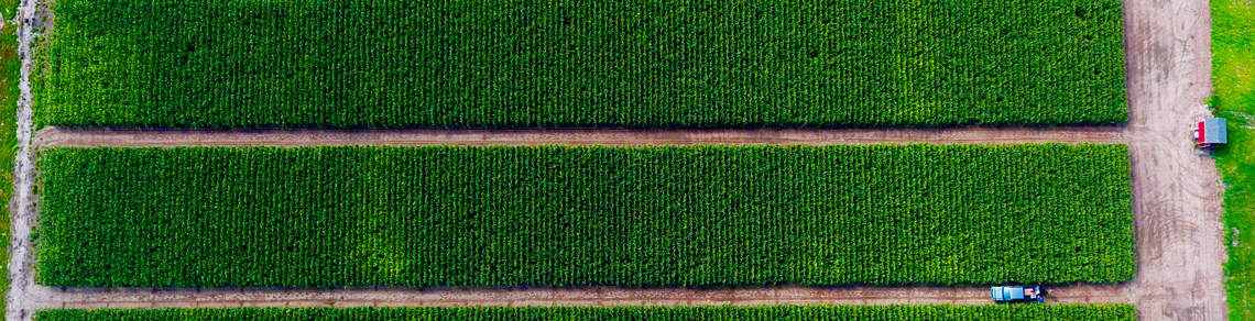 Bird's eye view of a truck driving in between rows of corn plots.