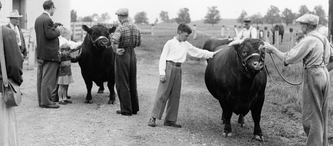 Black and white photo of children petting beef cattle being led by instructors