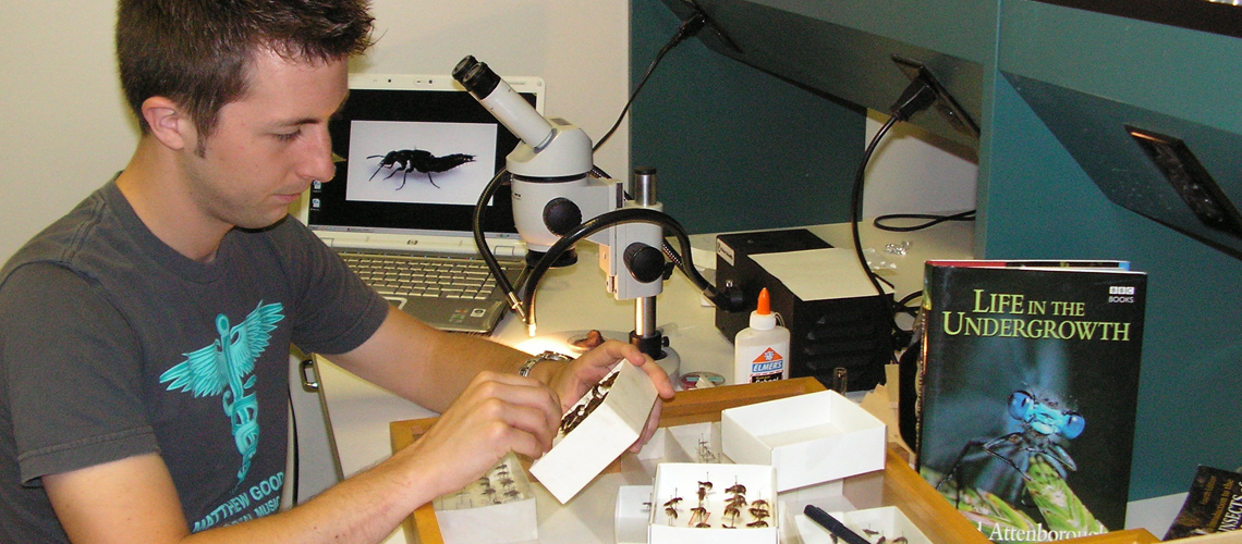 Male student looks at insect collection in small box, computer and microscope beside him