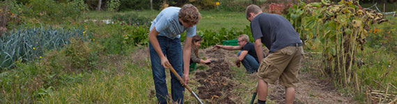 Four male students working in the urban organic farm