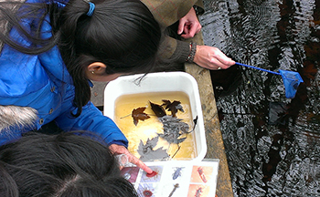 Students collecting insects from water.