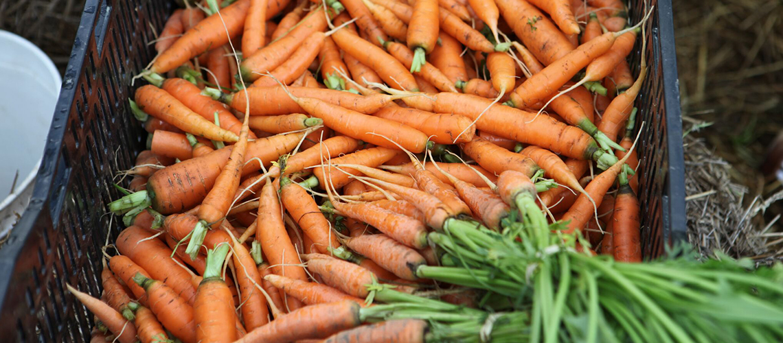 A crate full of carrots.