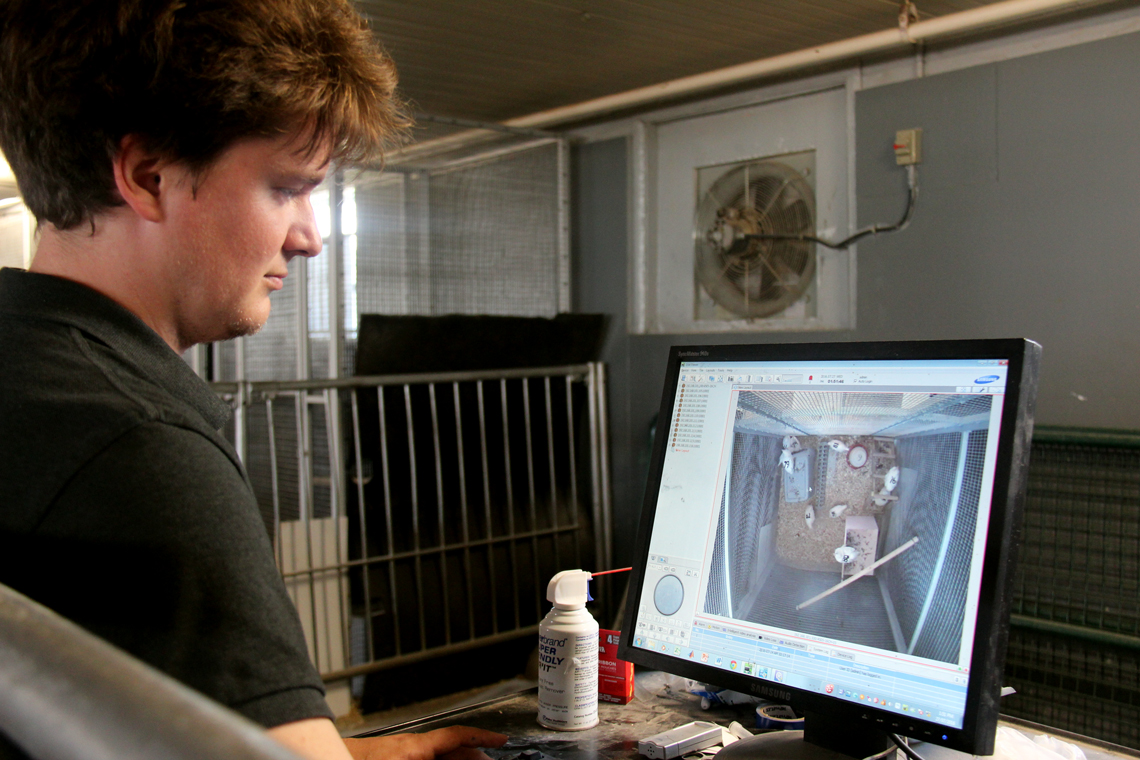 Patrick watches live video of hens on computer in barn.