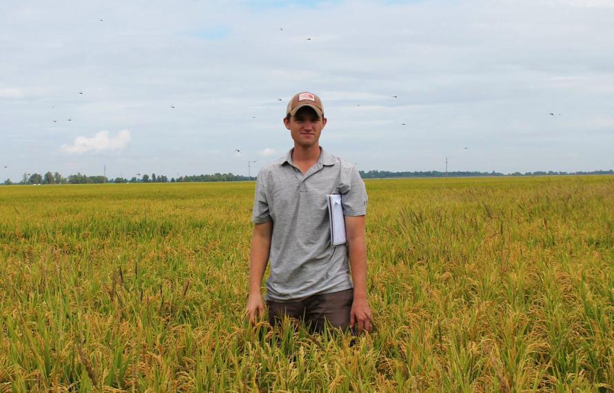 David stands in a rice field.