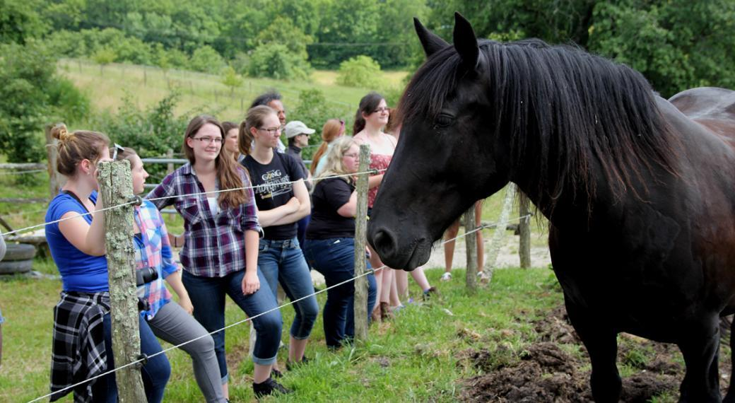 A group of students admire a large black horse from outside the pasture fence.
