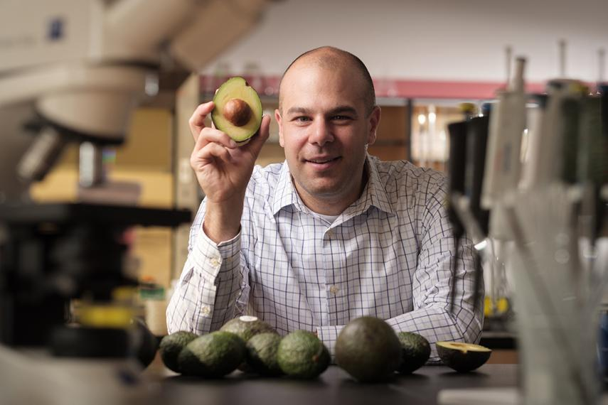 Paul Spagnuolo holds up avacado in a lab near microscopes