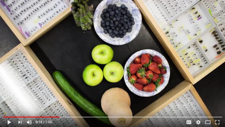 Screen shot of video player with food in bowls near trays of bee specimens.