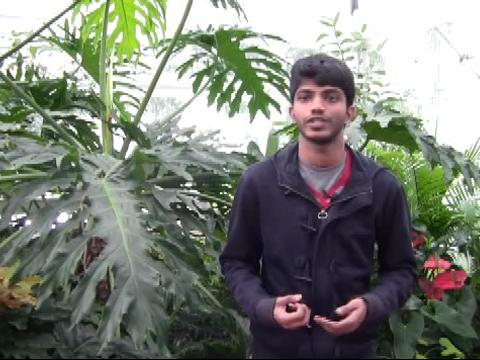 Noel Mano in black sweater stands in greenhouse beside tropical plants