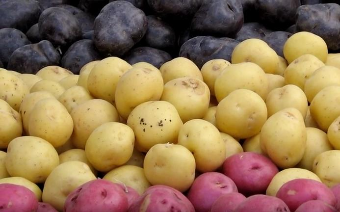 Purple, yellow and red potatoes