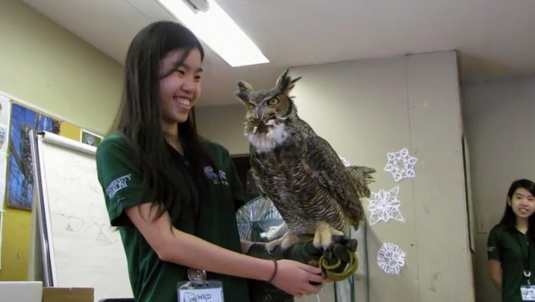 Female student stands in classroom with a large grey and white own on her arm