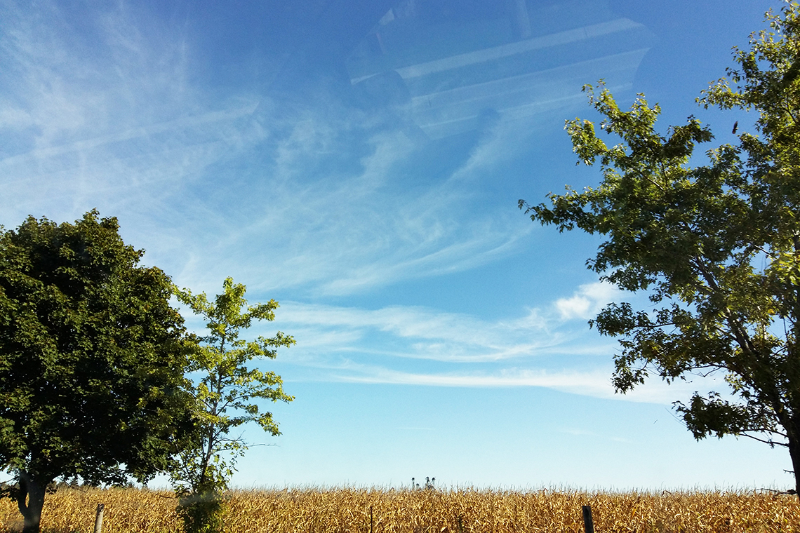 Two trees frame a field of yellowing corn against a blue sky.
