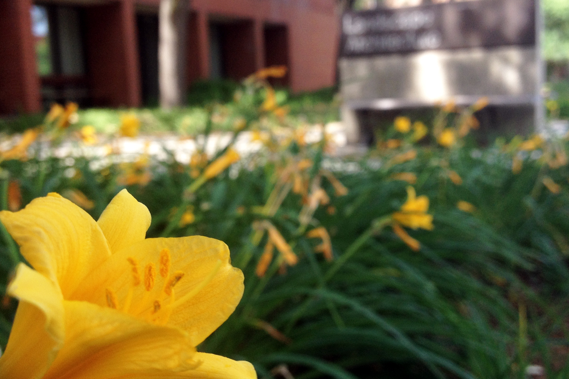 Close up image of yellow flower on walkway toward Landscape Architecture building.