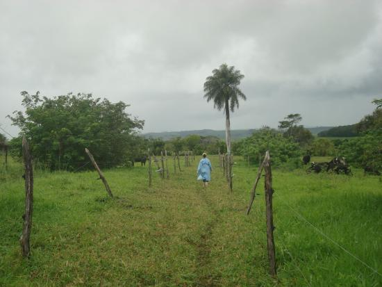 Grazing paddocks planted with legume trees in Itambe, Pernambuco.