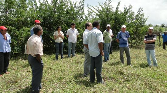 Field day demonstrating the benefits of silvopasture systems for small farm holders; Itambe, PE, Brazil.